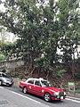 HK ML 香港半山區 Mid-levels 舊山頂道 Old Peak Road near Hornsy Road April 2020 SS2 14.jpg