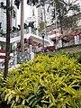 HK SW 上環 Sheung Wan 堅巷花園 Caine Lane Garden February 2020 SS2 11.jpg