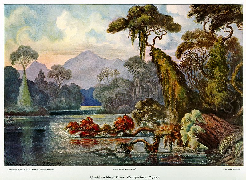 File:Haeckel Ceylon Jungle River.jpg