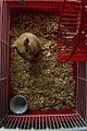 Hamster Cage.jpg