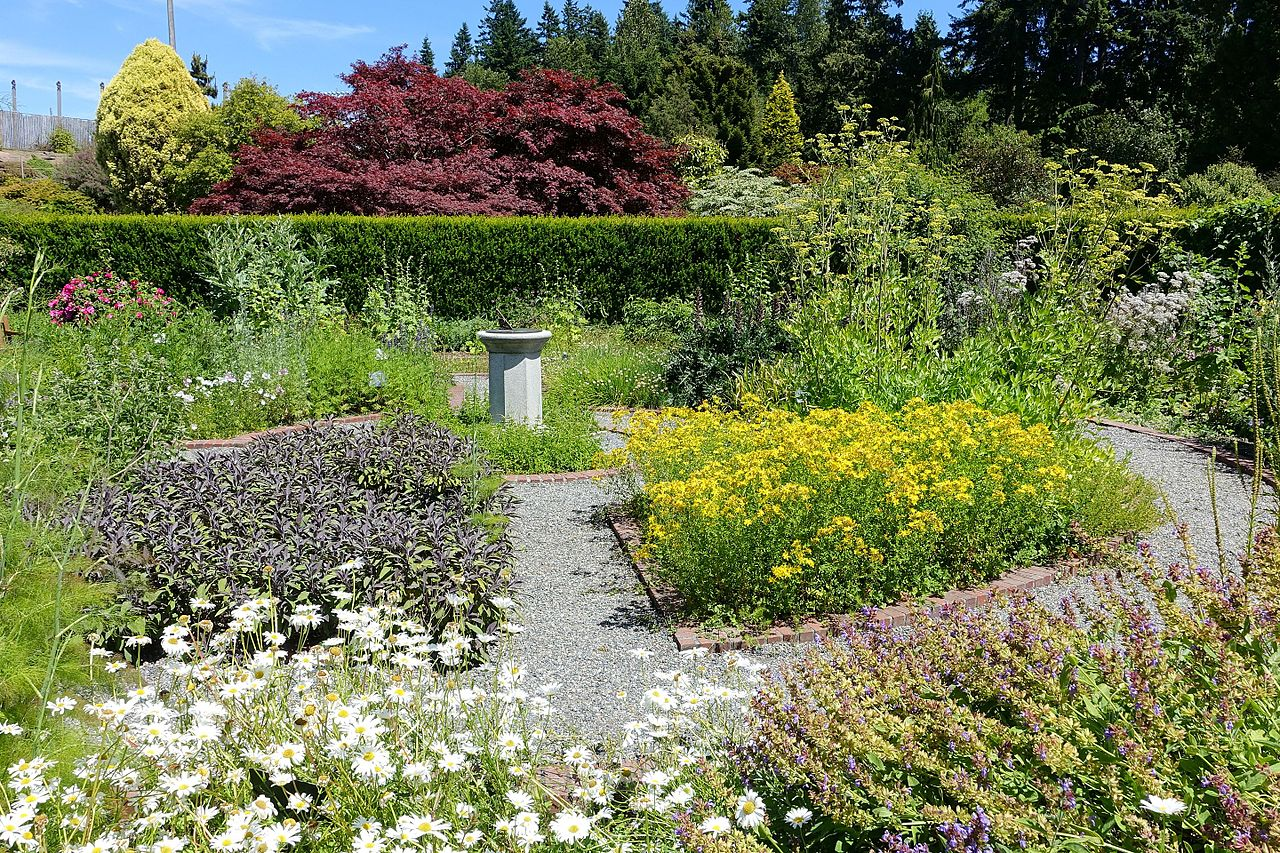 Physic garden wikipedia - File Harold And Frances Holt Physic Garden Ubc Botanical Garden Vancouver Canada Dsc08409 Jpg