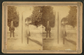 Hart's Daily Line Oklawaha Steamers, from Robert N. Dennis collection of stereoscopic views 2.png