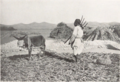 Harvest in Manchu (from a book Published in 1931) P.85.png