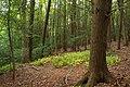 Hemlock Ravine (2) (8013980356).jpg