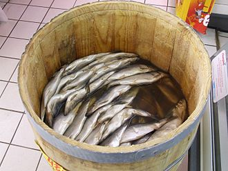 Atlantic herring - Clupea harengus in a barrel