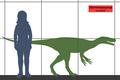 Herrerasaurus SIZE.png