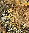 Hetaerolite, Chlorophoenicite, Zincite, Hodgkinsonite-166432.jpg