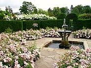 Hever Castle rose garden with fountain