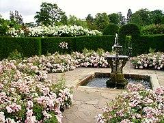 Rose Garden At Hever Castle In Kent United Kingdom