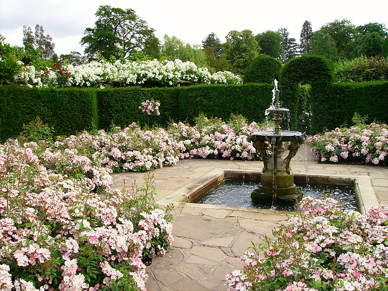 حدائق الورد 800px-Hever_Castle_rose_garden_with_fountain