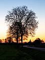 Hiddingsel, Silhouette mit Rödderstraße bei Sonnenaufgang -- 2020 -- 6769.jpg