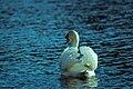 High Park Goose - panoramio.jpg