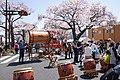 Hitachi Sakura Festival, Ibaraki 06.jpg
