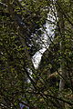 Hopfgartwasserfall 54691 2014-04-30.JPG
