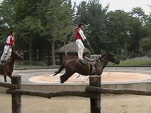 horse training, horse riding, thistle ridge stables, laura kelland-may, hunter judge, hunter jumper