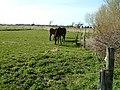 Horses - geograph.org.uk - 151871.jpg