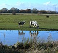 Horses along the River Soar - geograph.org.uk - 1043276.jpg