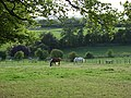 Horses at Sheepdrove - geograph.org.uk - 228686.jpg