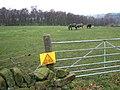 Horses grazing - geograph.org.uk - 647610.jpg