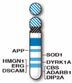 Human chromosome 21 with ASD genes from IJMS-16-06464.png