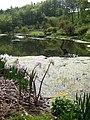 Hutts Gill lake (2) - geograph.org.uk - 804748.jpg