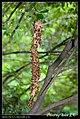 Hymenoptera (6022023145).jpg