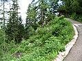 IMG 0897 - Obertraun-Dachstein - Path to Eisriesenhöhle.JPG