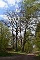 Idstein, Naturdenkmal nahe dem Wolfsbach.jpg