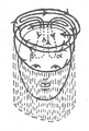 Illustration from Foucauld's Dictionnaire touareg, page 439.png