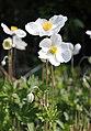 Im Frühling IMG 1724OB.jpg