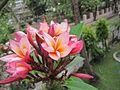 Indian Flowers..JPG