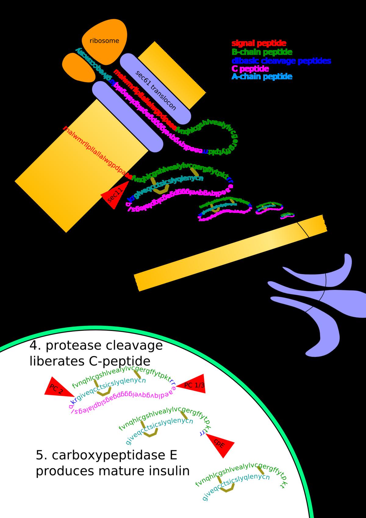 Datum obrane: 19.07.2012. god. vezu, mora se spriječiti racemizacija na α-C atomu, kako se ne bi dobili peptidi s.