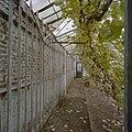 Interieur, oude muurkas, fruitmuur met latwerk, druivenranken - Beesd - 20404836 - RCE.jpg