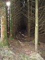 Into the Forest we go ... - geograph.org.uk - 759571.jpg