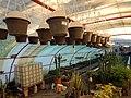 "Iran-qom-Cactus-The greenhouse of the thorn world گلخانه کاکتوس ""دنیای خار"" در روستای مبارک آباد قم- ایران 25.jpg"
