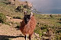 Isla del Sol, Titicaca Lake - panoramio.jpg