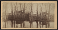 Island and fish pond in the park Newport N. Y., from Robert N. Dennis collection of stereoscopic views.png