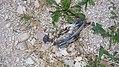 Italien-Spello-Porta Montanara-Dead Bird-02.jpg
