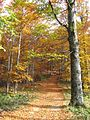 Jablanik - zapadna Srbija - mesto Debelo brdo - Na putu ka vrhu Jablanika - Bukova šuma u jesen 7.jpg