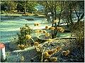 January Frost Botanic Garden Freiburg - Master Botany Photography 2014 - series Germany Diamond pictures - panoramio (6).jpg
