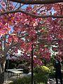 Japanese Friendship Garden (Balboa Park, San Diego) 8 2016-05-14.jpg