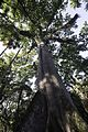Jardim Botânico do Rio de Janeiro - 130715-6594-jikatu (9299689700).jpg