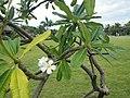 Jardins de Paofai - Papeete - panoramio (4).jpg