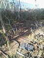 Jean Fleury tree.jpg