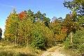 Jesień - panoramio (12).jpg