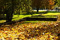 Jesień na Plantach1.jpg