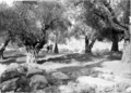 Jewish graves in Hebron cropped.png