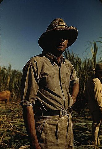 Jíbaro - Puerto Rican jíbaro in a sugar-cane field during harvest, ca. 1941