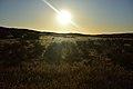 Kalahari landscape, Kalahari, Northern Cape, South Africa (20534660152).jpg