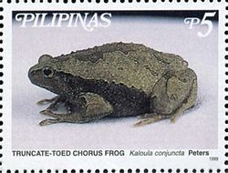 Kaloula conjuncta 1999 stamp of the Philippines.jpg